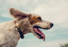 10 жизненных уроков от вашей… собаки - «Смысл жизни»