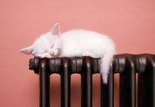 Почему люди спят меньше животных? - «Здоровье»