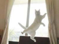 Танцующий кот стал новой интернет-звездой фото - Домашние питомцы ... - «Дом»