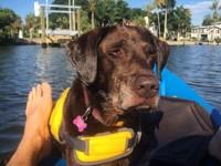 Хозяин отправился в путешествие с собакой, у которой нашли рак - Домашние питомцы ... - «Дом»