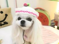 Пользователи Сети нашли самую стильную собачку (фото) - Домашние питомцы ... - «Дом»