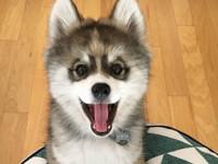 Невероятно милый щенок, который украдет ваше сердце (фото) - Домашние питомцы ... - «Дом»