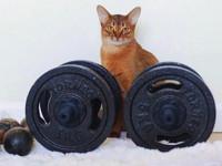 Фитнес начинается с коврика - «Дом»