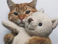 10 лучших афоризмов о кошках - Домашние питомцы ... - «Дом»