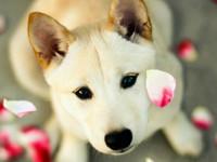 10 фактов о собаках, которых вы, скорее всего, не знали - Домашние питомцы ... - «Дом»