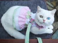 Кошка-супермодель рекламирует известные бренды (фото) - Домашние питомцы ... - «Дом»