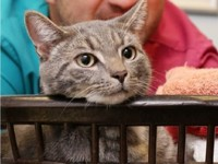 Чудо: котенок в Англии выжил после стирки в машине при 60 С - Домашние питомцы ... - «Дом»
