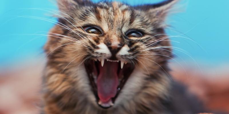 Бешенство у кошек - что это такое?