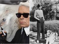Габриэль Шанель и ее мраморные доги Луна и Солнце - «Мода»
