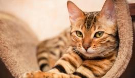Почему и как кошки лечат людей