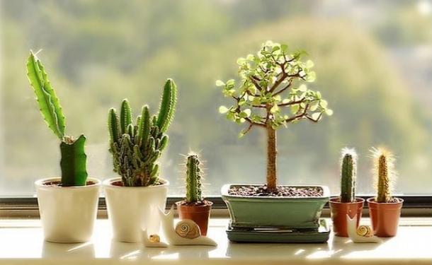 Растения в доме: 50 идей, как необычно разместить кактусы и суккуленты