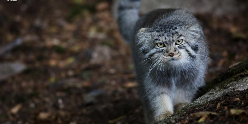 Кошка, которая гуляет сама по себе - «Стиль жизни»