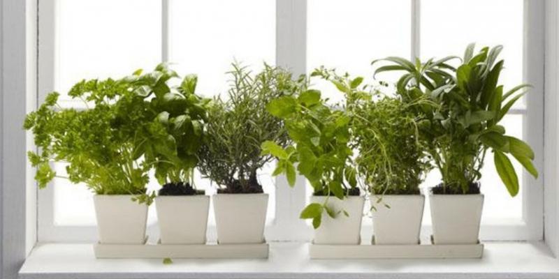 Мини-огород зимой и летом - «Стиль жизни»