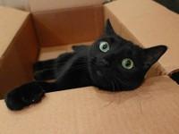 …картонных коробках - «Дом»