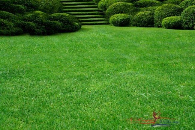 Как ухаживать за газоном во дворе