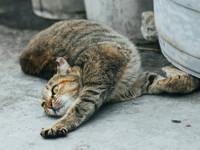 Смотрите также нашу подборку «Кот в деталях: фото и факты». - «Дом»