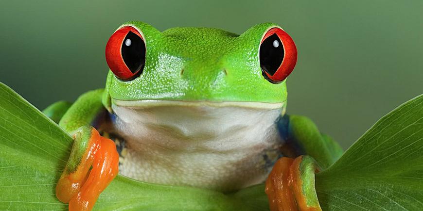 Террариум для древесных лягушек