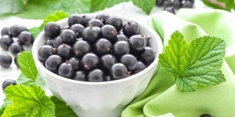 11 лечебных свойств черной смородины - «Здоровье»