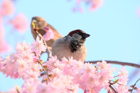 Создаем сад, привлекательный для птиц - «Дом»