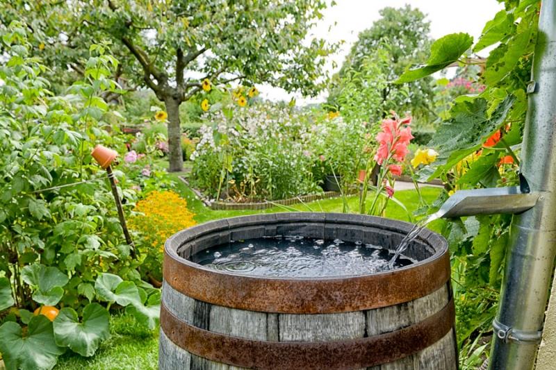 Что купить для опрыскивания растений в саду и огороде? - «Дом»