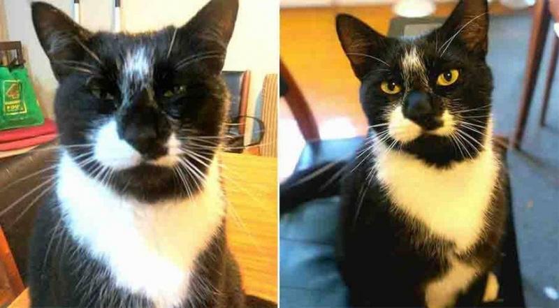 «У нее замечательный вкус»: кошка Мо из Новой Зеландии ворует вещи у соседей - «Я и Дом»