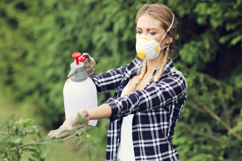 Чем опрыскивать от вредителей в начале лета: народные средства - «Дом»